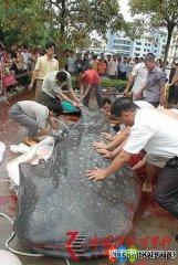 """扬州市扬庙镇惊现吃人怪兽是假 巨型大鱼到处""""吃人"""""""